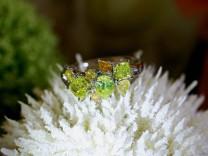 カラーダイヤモンド Luciole Collection 042